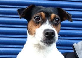Pippa the dog